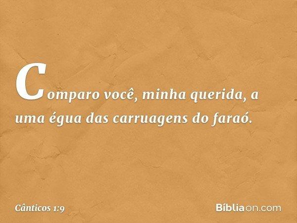 Comparo você, minha querida, a uma égua das carruagens do faraó. -- Cânticos 1:9