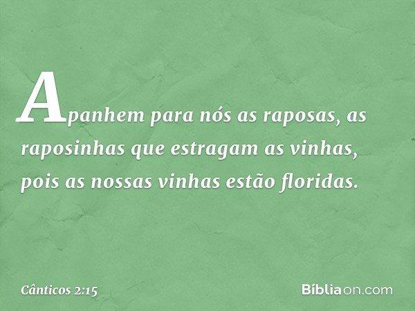 Apanhem para nós as raposas, as raposinhas que estragam as vinhas, pois as nossas vinhas estão floridas. -- Cânticos 2:15