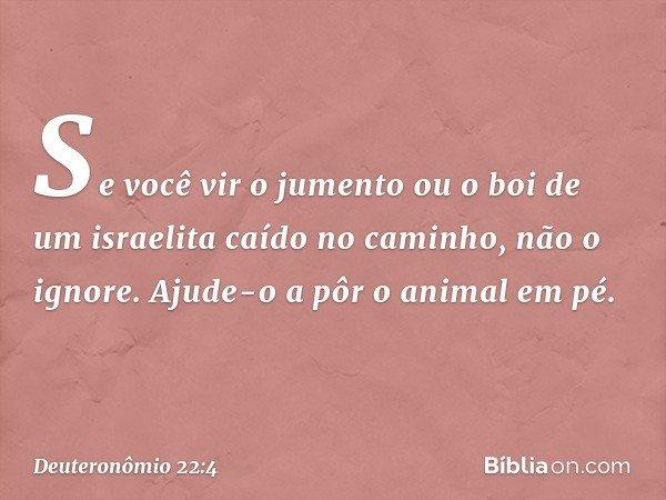 """""""Se você vir o jumento ou o boi de um israelita caído no caminho, não o ignore. Ajude-o a pôr o animal em pé. -- Deuteronômio 22:4"""