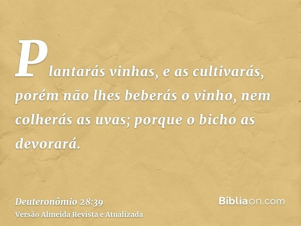 Plantarás vinhas, e as cultivarás, porém não lhes beberás o vinho, nem colherás as uvas; porque o bicho as devorará.