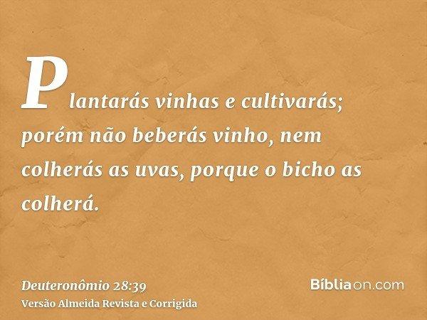 Plantarás vinhas e cultivarás; porém não beberás vinho, nem colherás as uvas, porque o bicho as colherá.