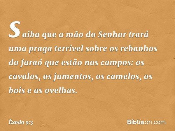 saiba que a mão do Senhor trará uma praga terrível sobre os rebanhos do faraó que estão nos campos: os cavalos, os jumentos, os camelos, os bois e as ovelhas. -