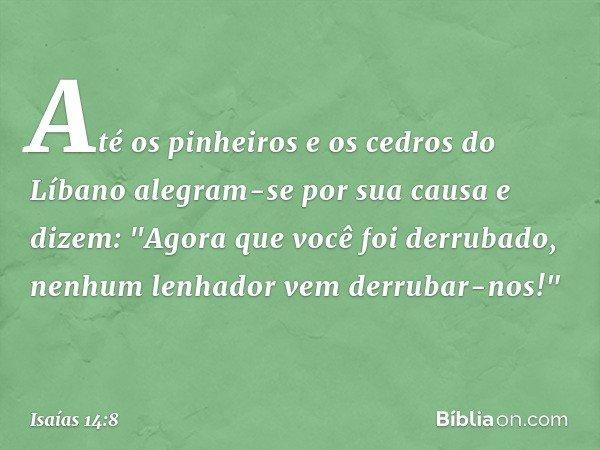 """Até os pinheiros e os cedros do Líbano alegram-se por sua causa e dizem: """"Agora que você foi derrubado, nenhum lenhador vem derrubar-nos!"""" -- Isaías 14:8"""