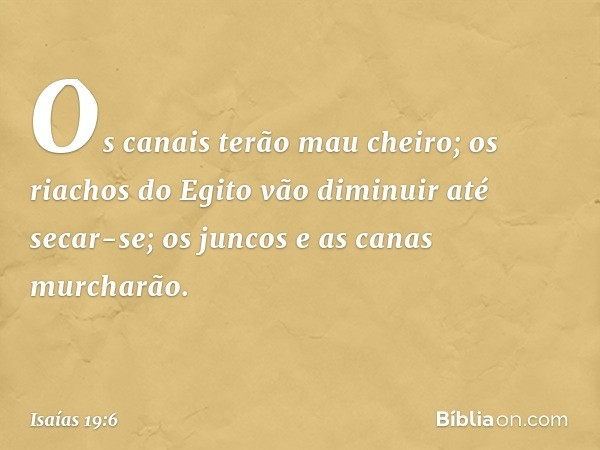Os canais terão mau cheiro; os riachos do Egito vão diminuir até secar-se; os juncos e as canas murcharão. -- Isaías 19:6