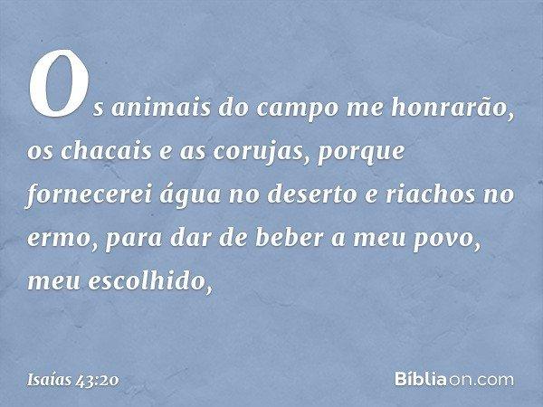 Os animais do campo me honrarão, os chacais e as corujas, porque fornecerei água no deserto e riachos no ermo, para dar de beber a meu povo, meu escolhido, -- I