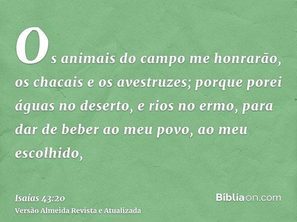 Os animais do campo me honrarão, os chacais e os avestruzes; porque porei águas no deserto, e rios no ermo, para dar de beber ao meu povo, ao meu escolhido,