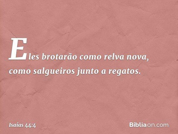 Eles brotarão como relva nova, como salgueiros junto a regatos. -- Isaías 44:4