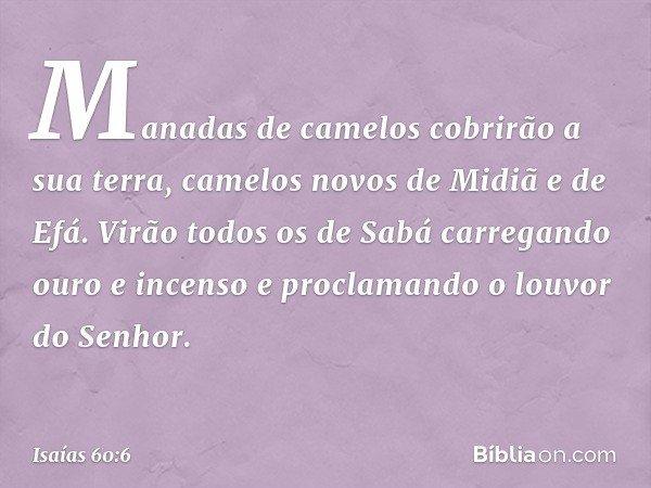 Manadas de camelos cobrirão a sua terra, camelos novos de Midiã e de Efá. Virão todos os de Sabá carregando ouro e incenso e proclamando o louvor do Senhor. --
