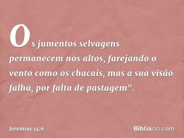 """Os jumentos selvagens permanecem nos altos, farejando o vento como os chacais, mas a sua visão falha, por falta de pastagem"""". -- Jeremias 14:6"""