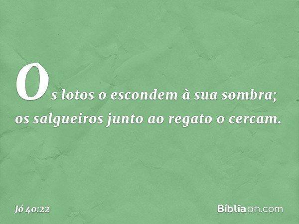 Os lotos o escondem à sua sombra; os salgueiros junto ao regato o cercam. -- Jó 40:22