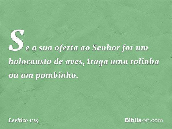 """""""Se a sua oferta ao Senhor for um holocausto de aves, traga uma rolinha ou um pombinho. -- Levítico 1:14"""