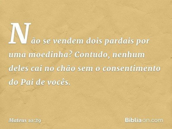 Não se vendem dois pardais por uma moedinha? Contudo, nenhum deles cai no chão sem o consentimento do Pai de vocês. -- Mateus 10:29