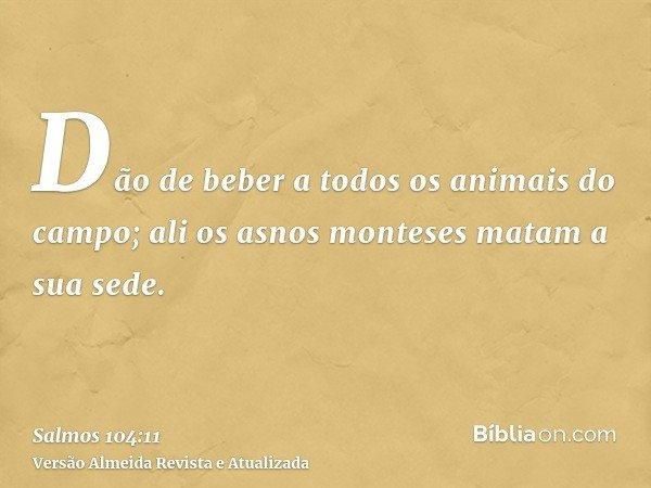 Dão de beber a todos os animais do campo; ali os asnos monteses matam a sua sede.