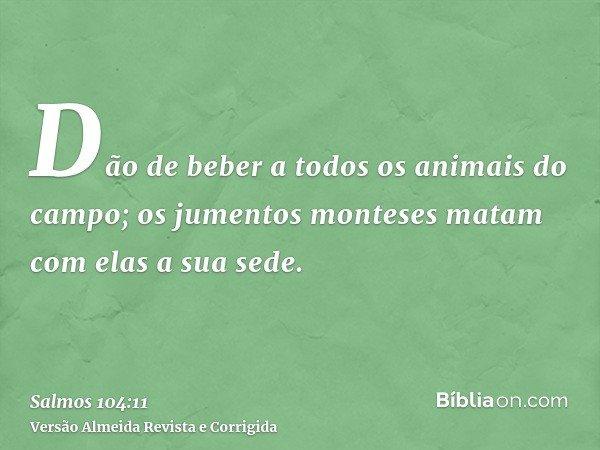 Dão de beber a todos os animais do campo; os jumentos monteses matam com elas a sua sede.