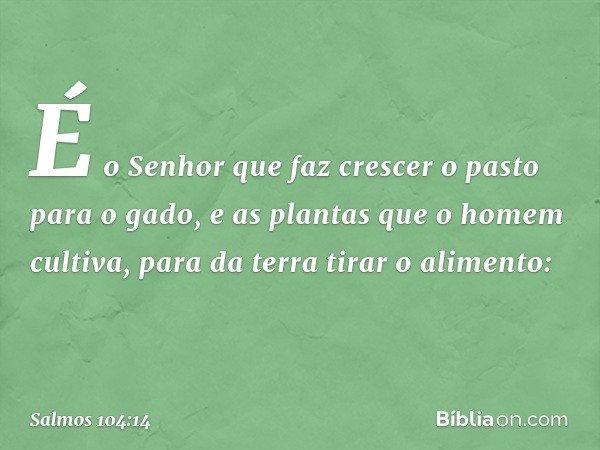 É o Senhor que faz crescer o pasto para o gado, e as plantas que o homem cultiva, para da terra tirar o alimento: -- Salmo 104:14
