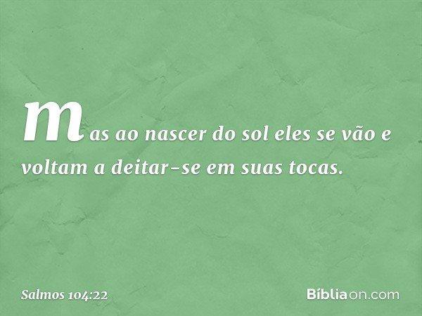 mas ao nascer do sol eles se vão e voltam a deitar-se em suas tocas. -- Salmo 104:22