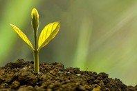 7 conselhos financeiros da Bíblia