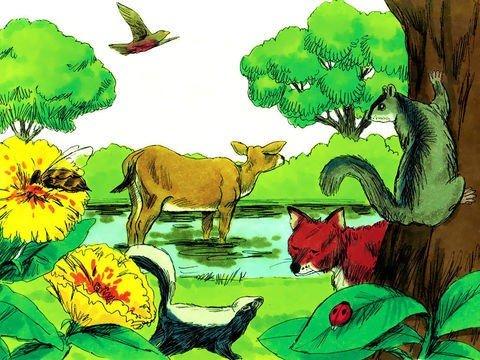 Sexto dia da criação - animais de várias espécies
