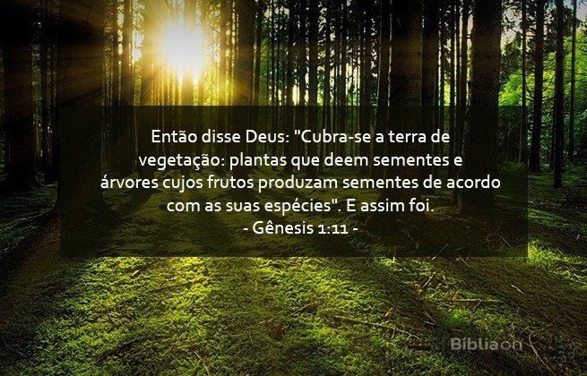 20 Frases De Deus Para Meditar E Inspirar Bíblia