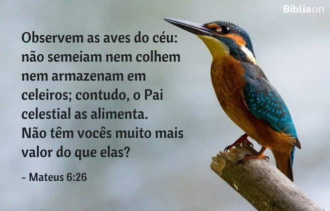 Observem as aves do céu: não semeiam nem colhem nem armazenam em celeiros; contudo, o Pai celestial as alimenta. Não têm vocês muito mais valor do que elas? Mateus 6:26