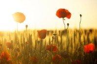 Salmo 127: As bênçãos que vêm de Deus