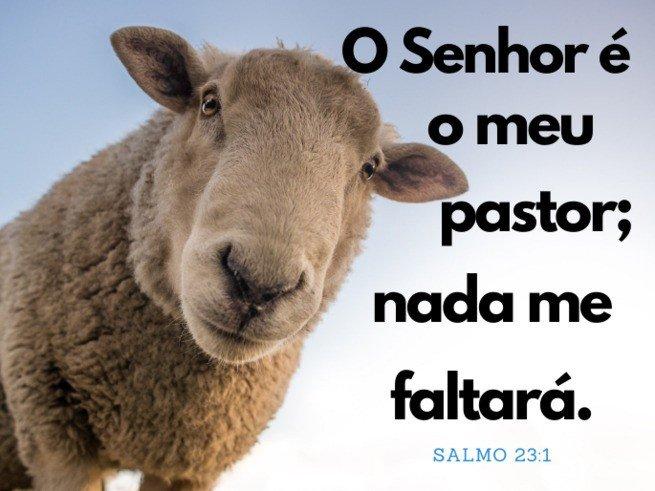 Imagem de uma ovelha - Salmo 23:1 'O Senhor é meu pastor, nada me faltará'