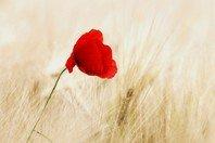 3 versículos que nos ensinam o sentido da vida